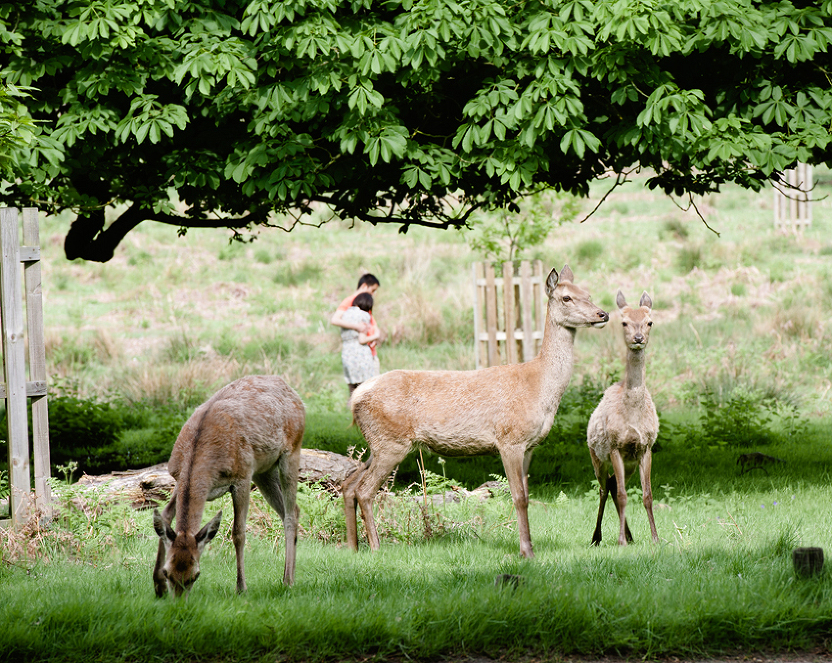 richmond-park-portraits